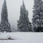 las sn
